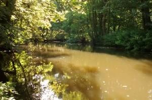 Fluss Bille